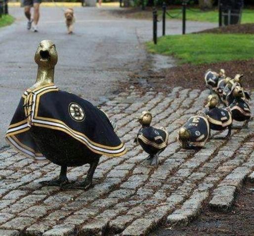 bruins ducklings